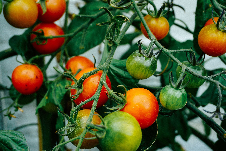 Raised planting beds vegetable garden
